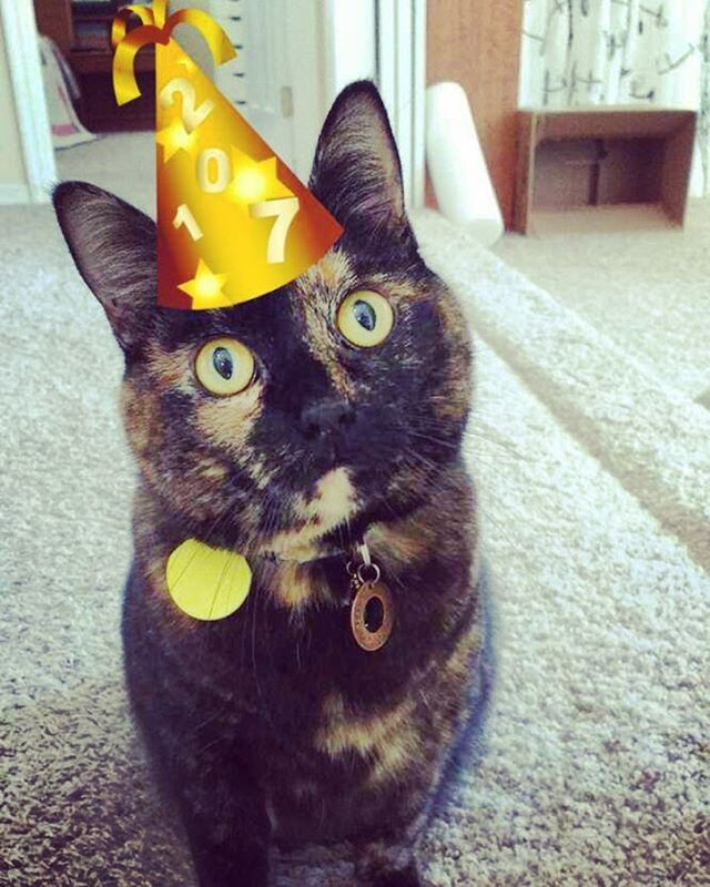 My fav feline Harlow is a party cat! She stayedhellip